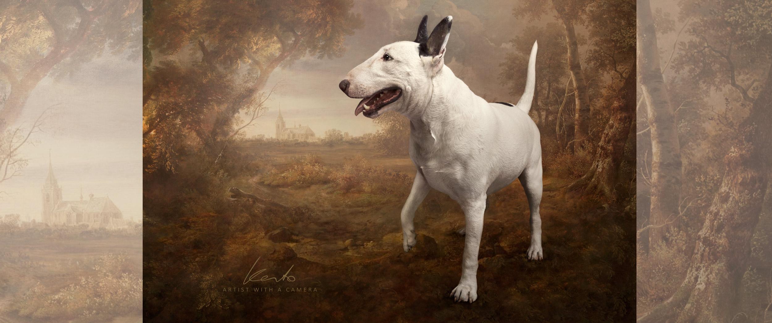 Fine art dog photography