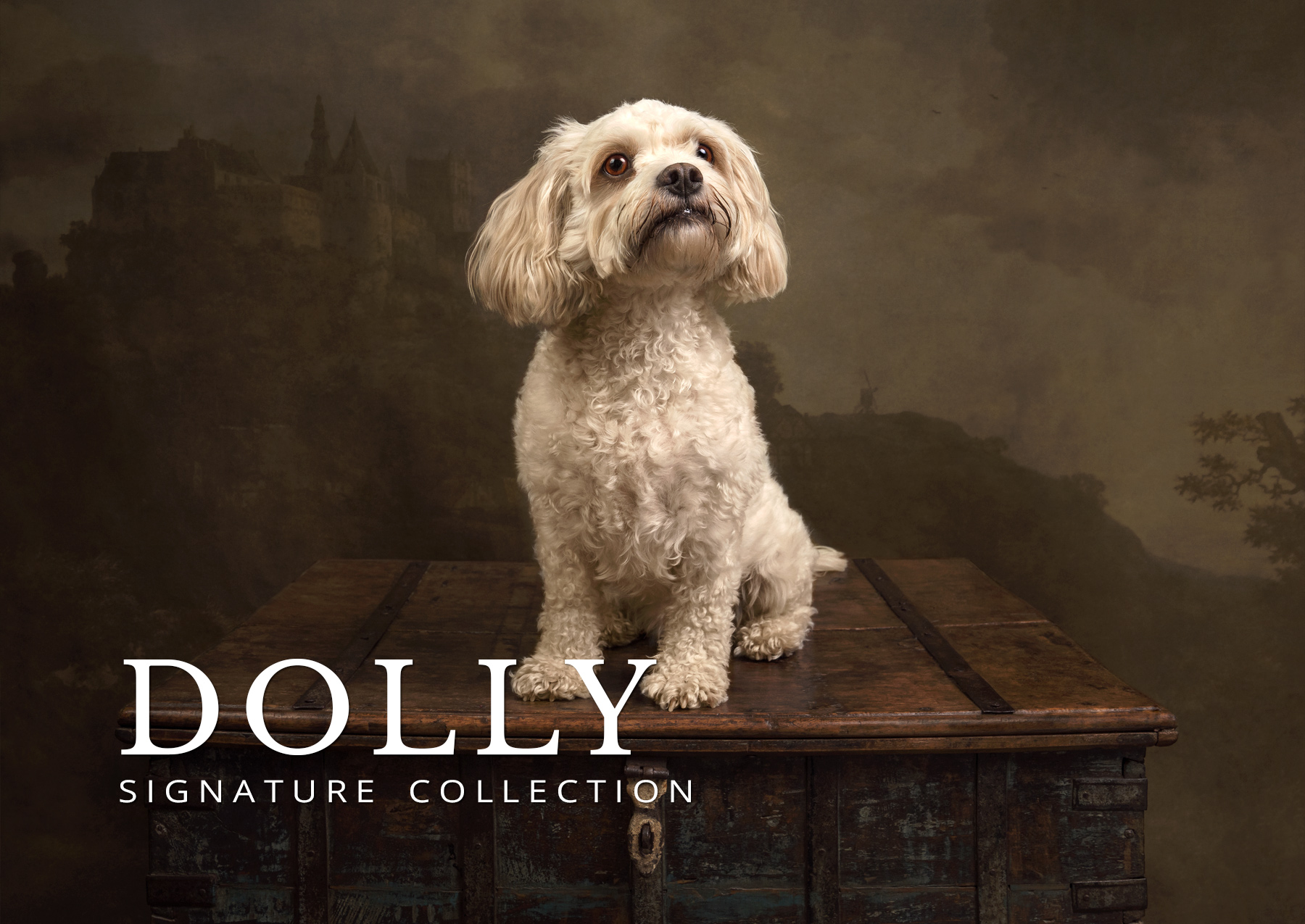 dolly before and after signature collection