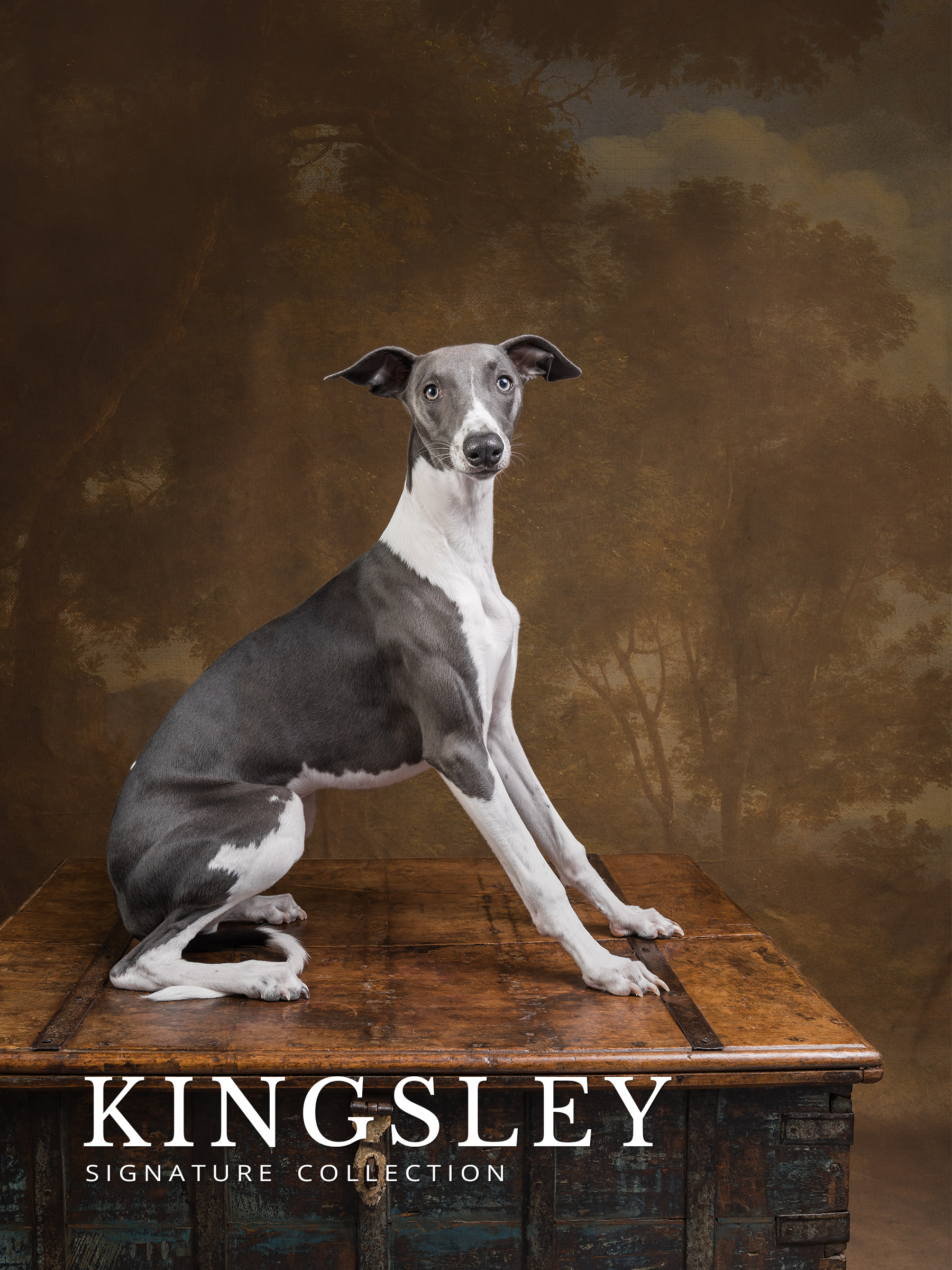 kingsley before and after gallery