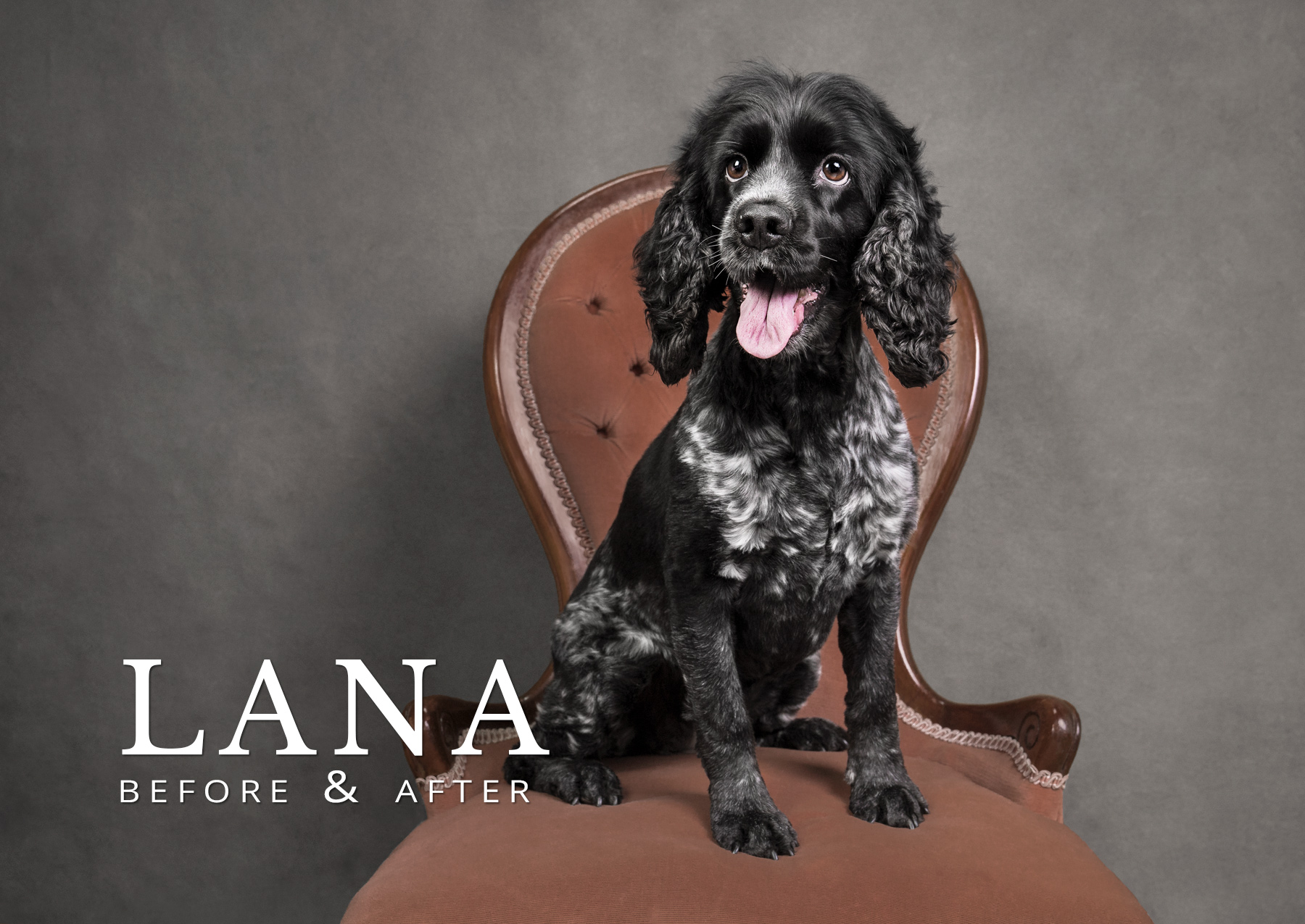 lana spaniel before and after