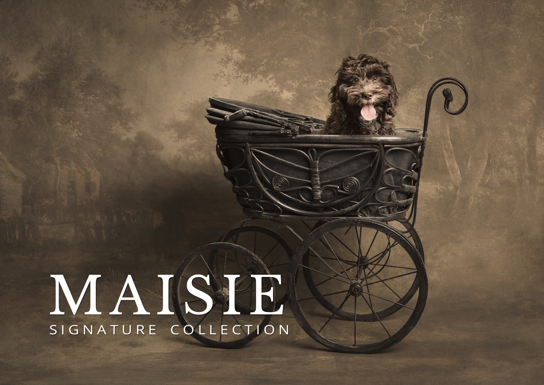 maisie before and after gallery