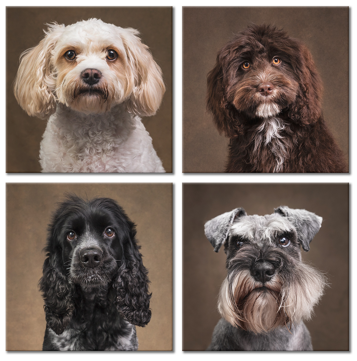 dog portraits by Kerto Studio