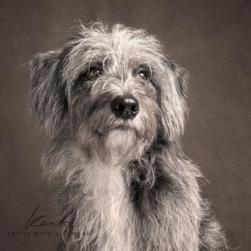 fine art dog photography kerto studio wokingham