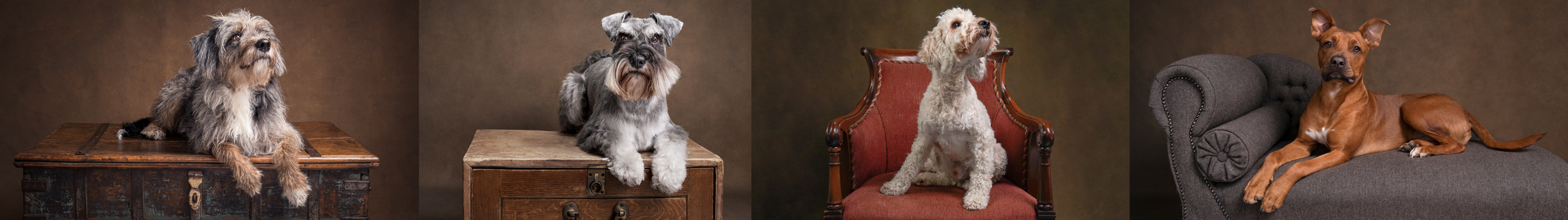 fine art pet photography in berkshire