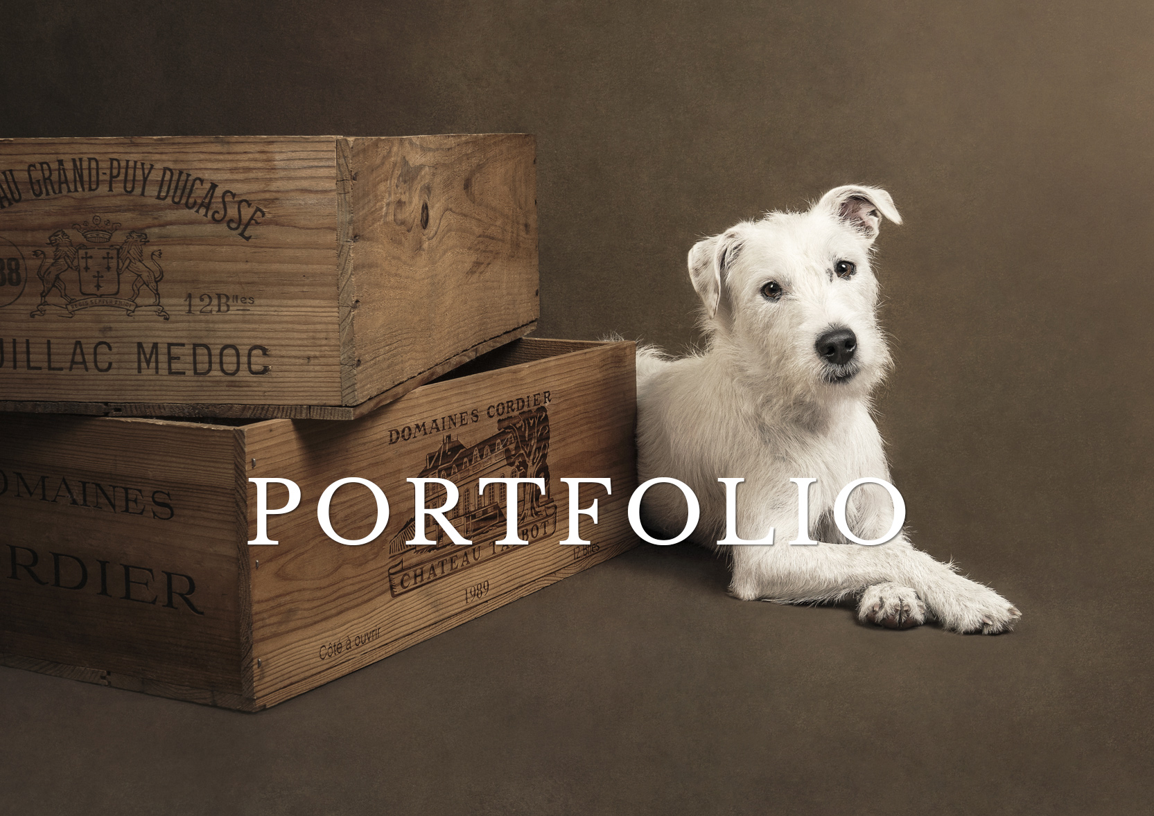 portfolio of fine art pet photography