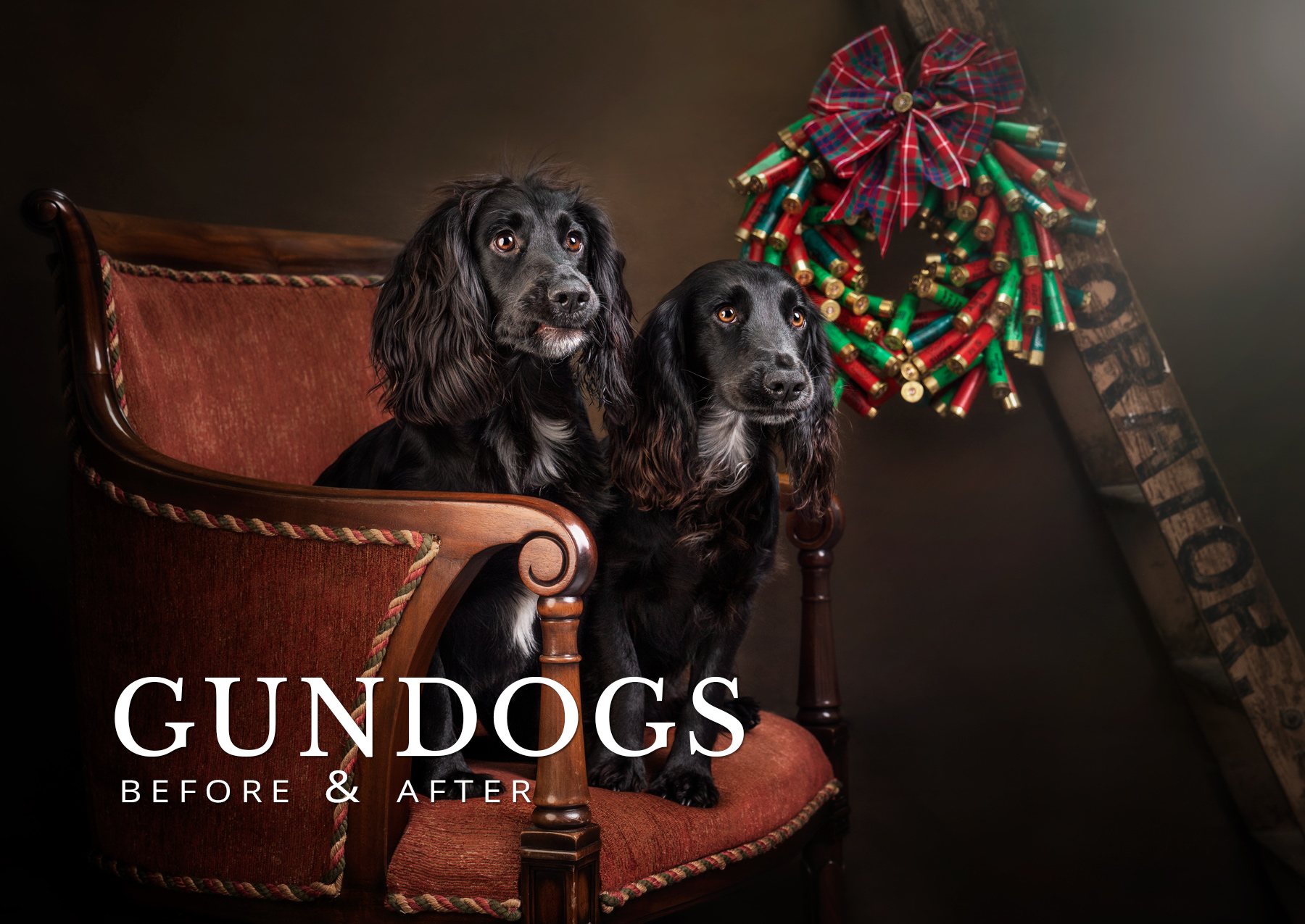Gundogs before and after
