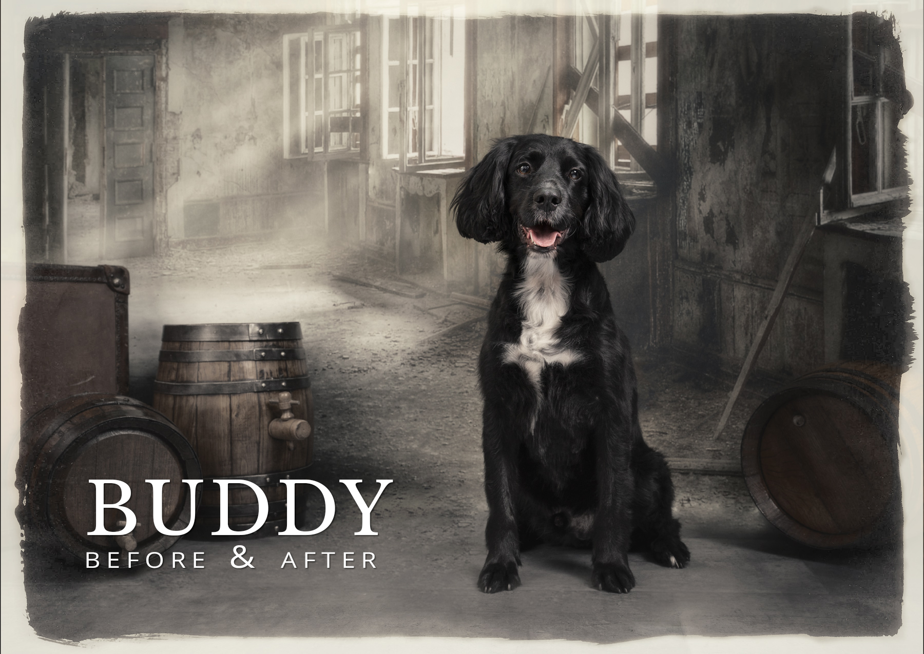 Buddy before and after