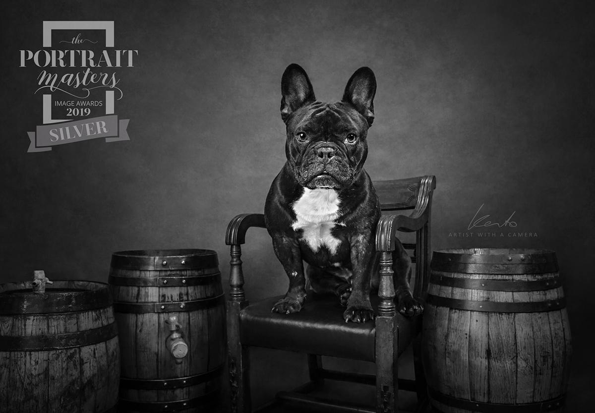 french-bulldog professional pet photography studiosouth england kerto studio