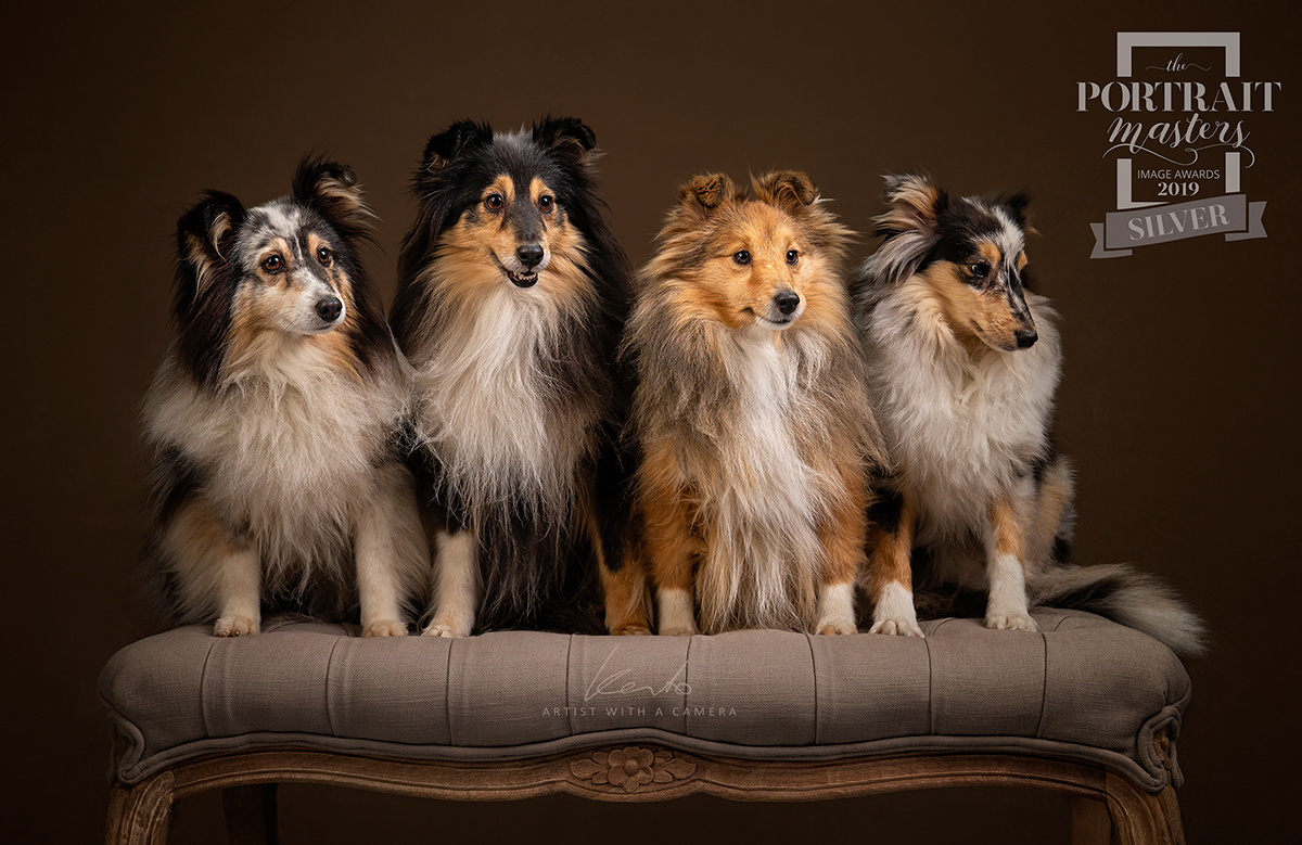 Kerto Studio award winning pet portraits dog